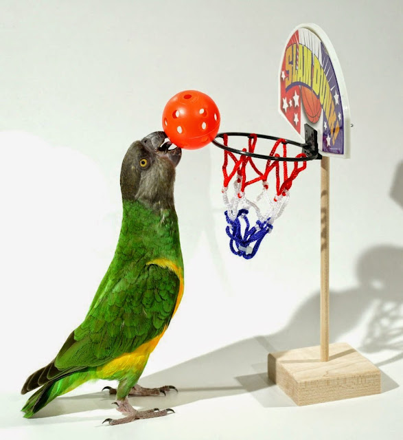 Coolest Basketball Inspired products and Designs (15) 3
