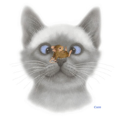 CAT with mouse on nose