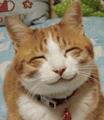 kucing lagi senyum
