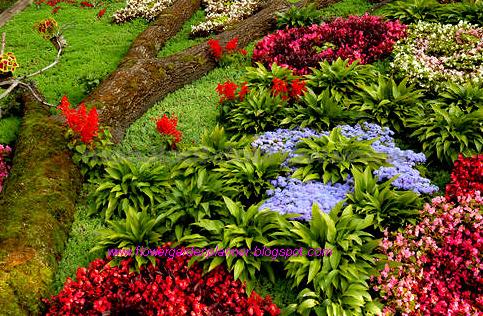 Flower garden planner expert landscape flower garden for Flower garden planner