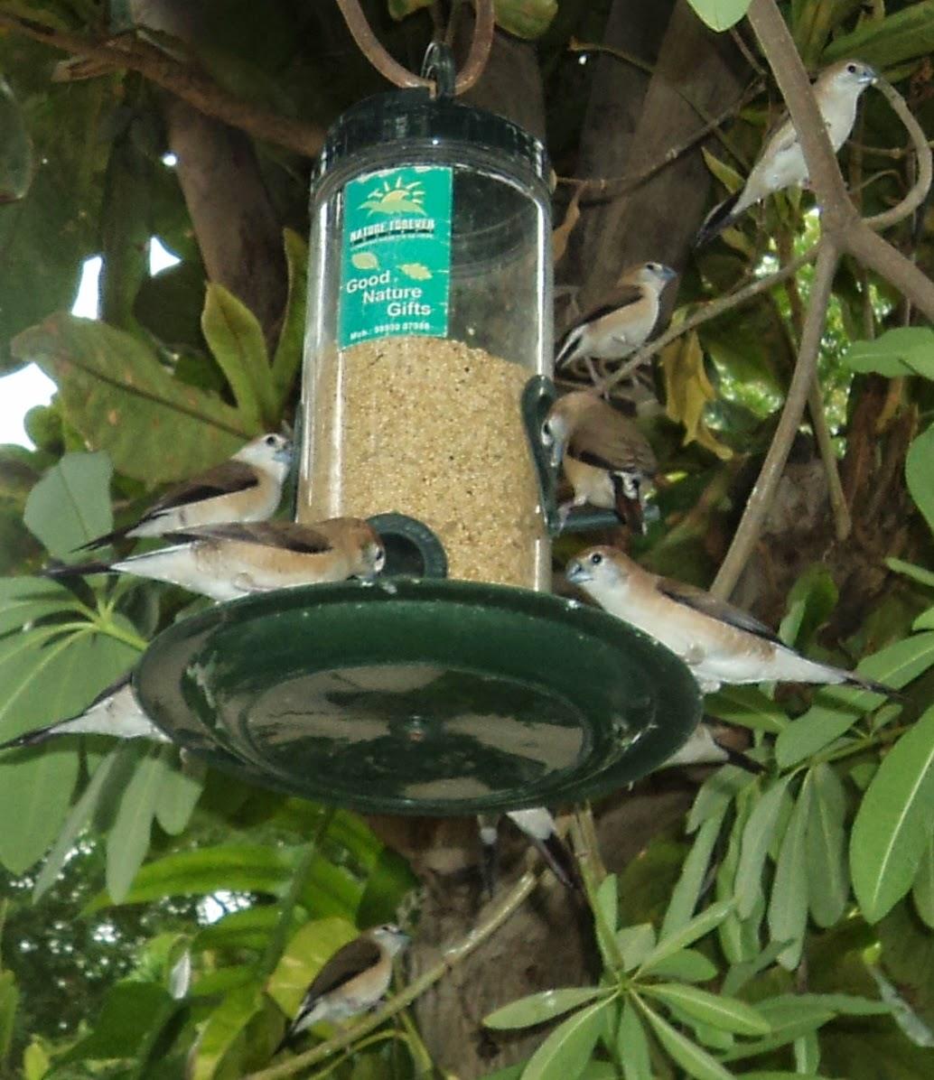 bird feeder at home backyard balcony green ahmedabad