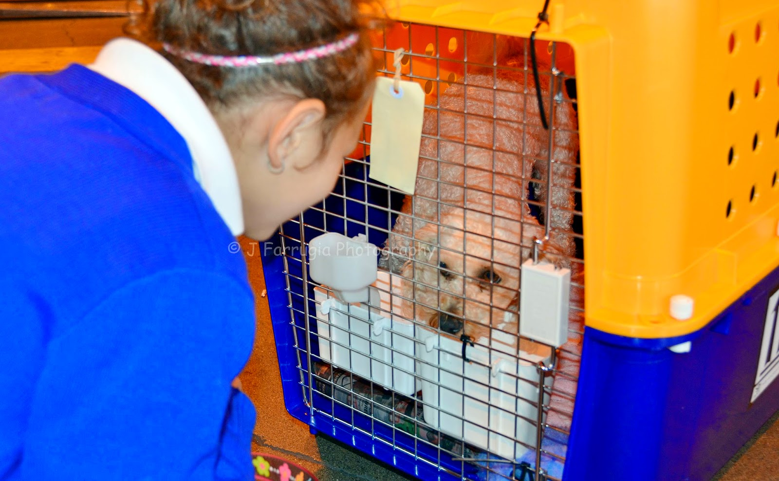 http://with2kidsintow.blogspot.ca/2015/05/how-to-move-your-pet-overseas-ultimate.html