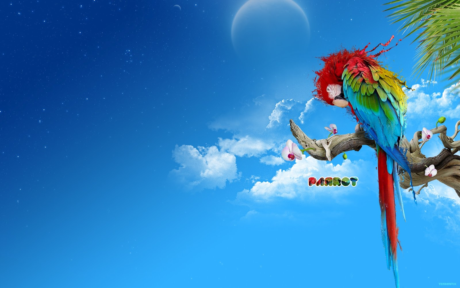 Hd Wallpaper Art : Parrot colors abstract digital art hd wallpapers free