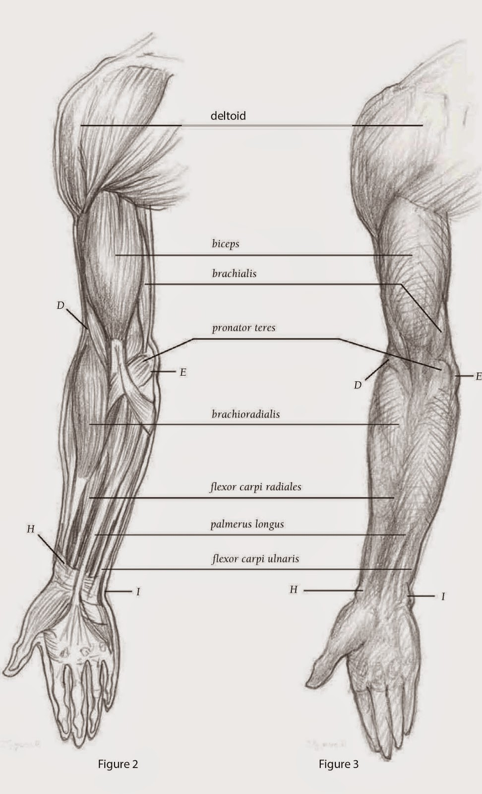 Drawings: DEPICTING THE ARM FRONT VIEW