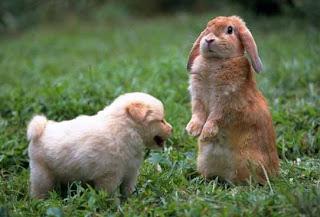 Kelinci dengan Anjing