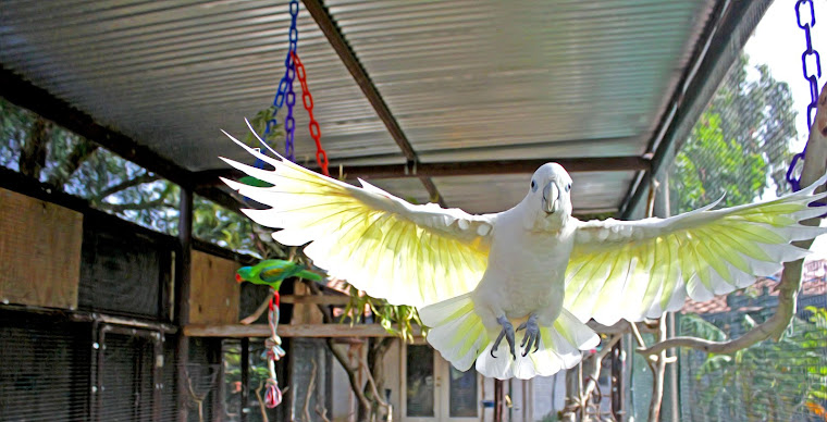 Barb's Bird Paradise and Aviaries!