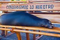Sea Lion in San Cristobal, Galapagos