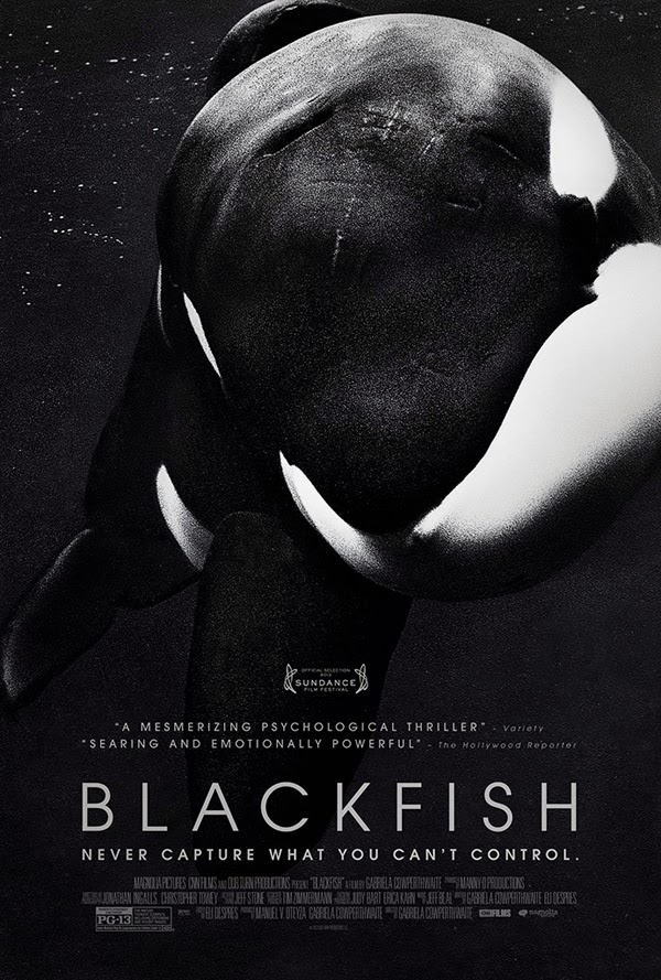 Documentaries to Watch - Blackfish || Sprinkles and Style