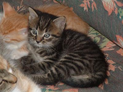 Cute Pussy Cat 24