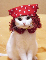 white cat with red yarn wig and red and white polka dot scarf