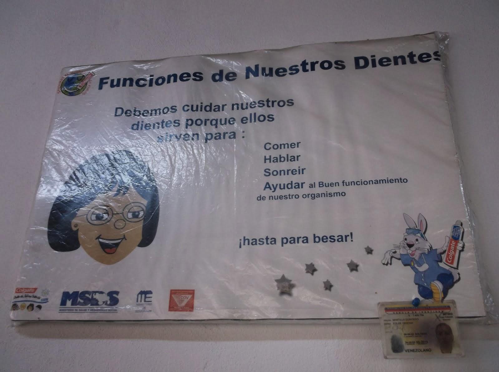 FUNCIONES DE NUESTROS DIENTES