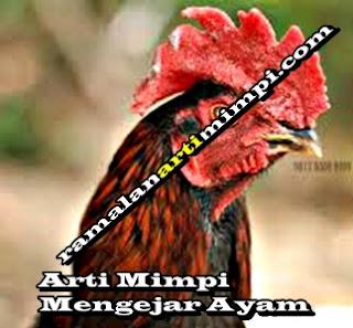 Arti Mimpi Mengejar Ayam