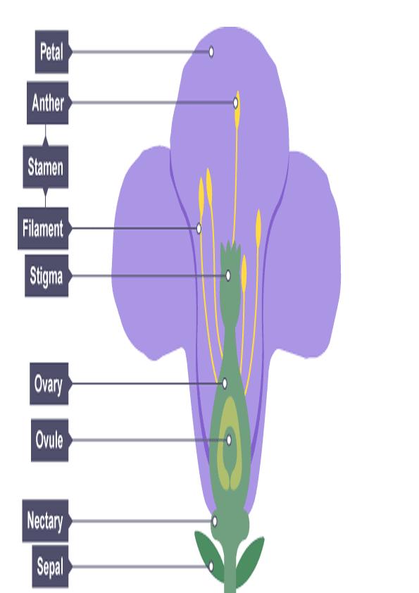 recorta y pega las partes de la flor