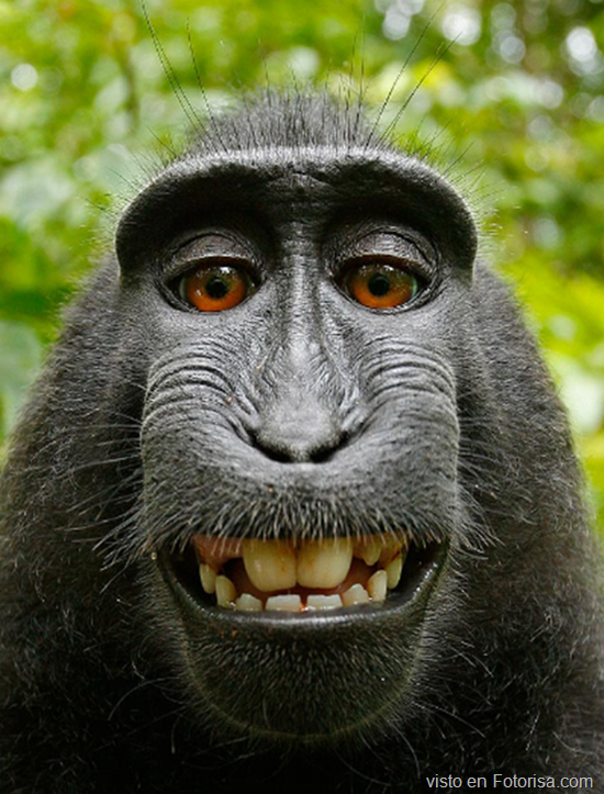 El mono de rollomotero.com