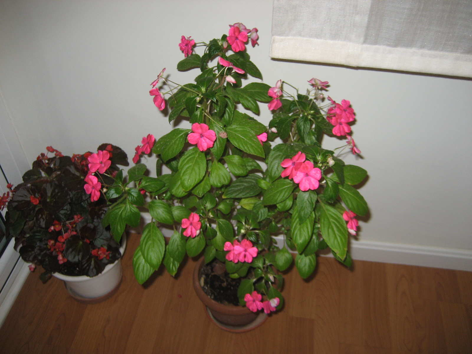 El huerto de balsas plantas de interior y exterior en macetas for Macetas plantas exterior