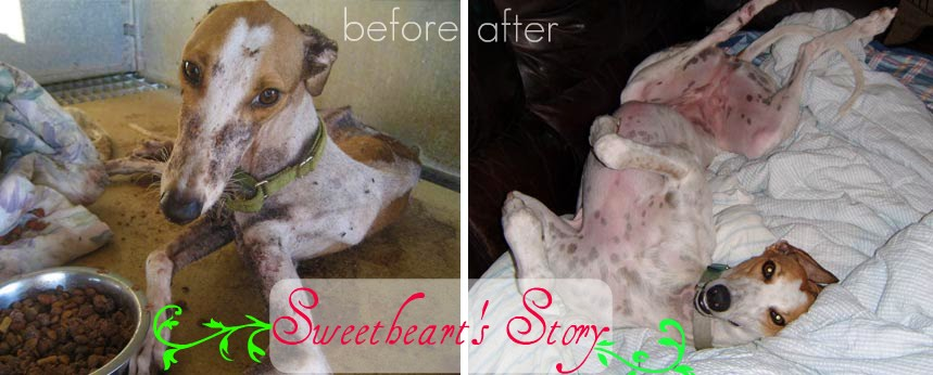 Sweetheart's Story