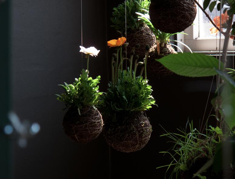 Certaines plantes ont un système darrosage assez complexe, dautres ...