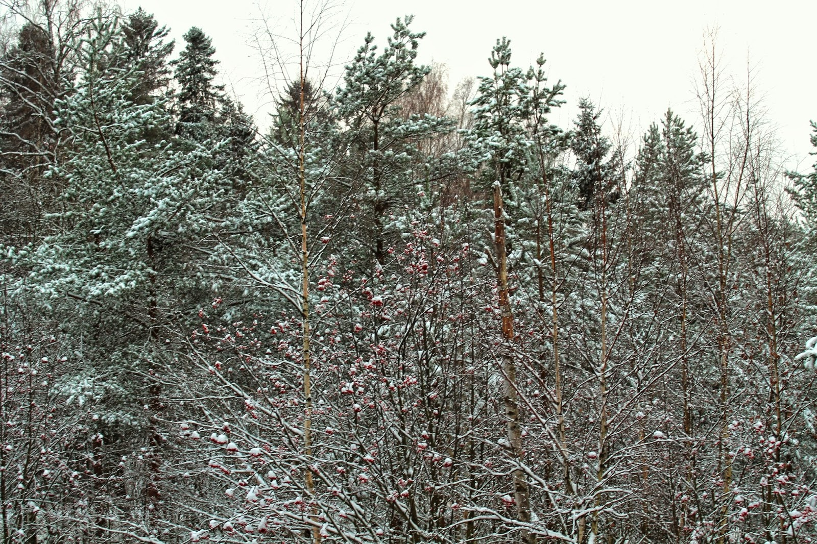landscape from my window at winter time: Finland, Espoo, snow and trees