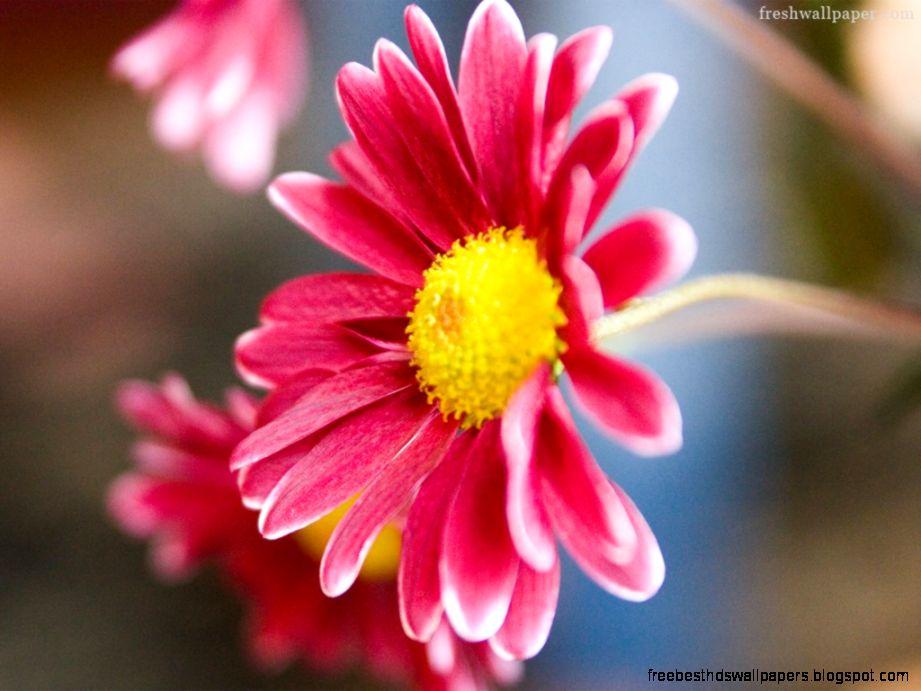 wallpaper flower images for desktops free best hd wallpapers