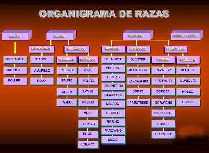 ORGANIGRAMA DE RAZAS