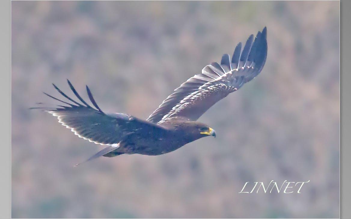 猛禽の館(Bird of prey)(変換後)