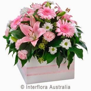 Florist Softness