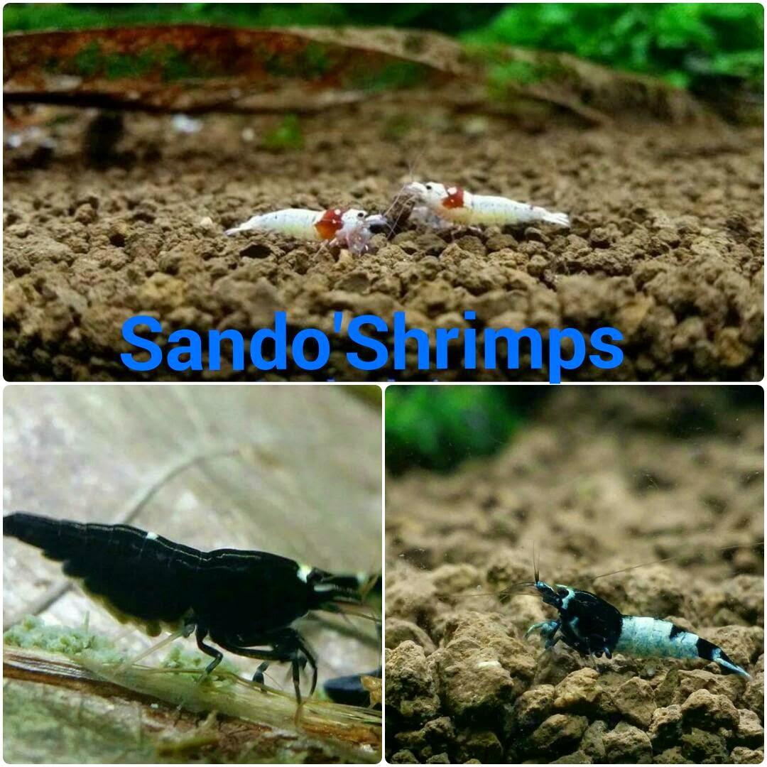 Sando'Shrimps