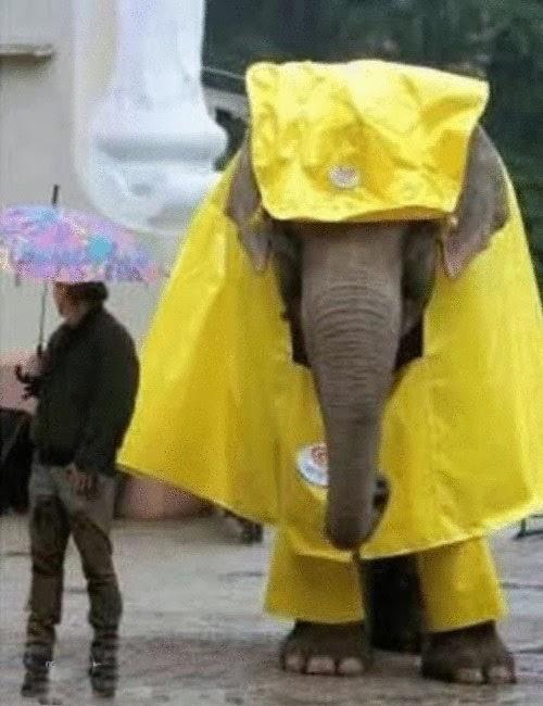 He Does not Like Rain