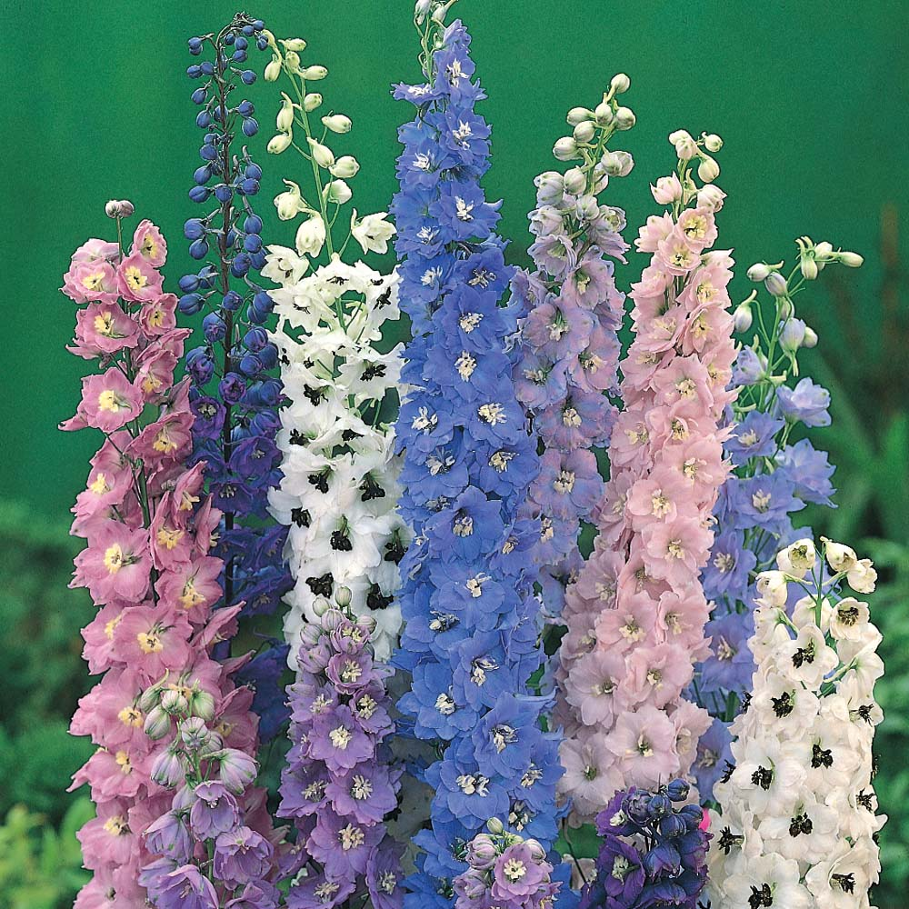 Cat 39 s adventures in lacquer land sally hansen delphinium for Easy to grow outdoor plants