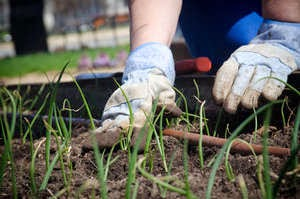 Five Tips for Spring Gardening
