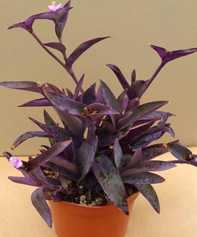 Perennes peque as colecci n de hojas y flores - Plantas de exterior faciles de cuidar ...