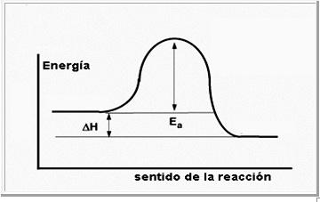 Concepto de enzimas en biologia