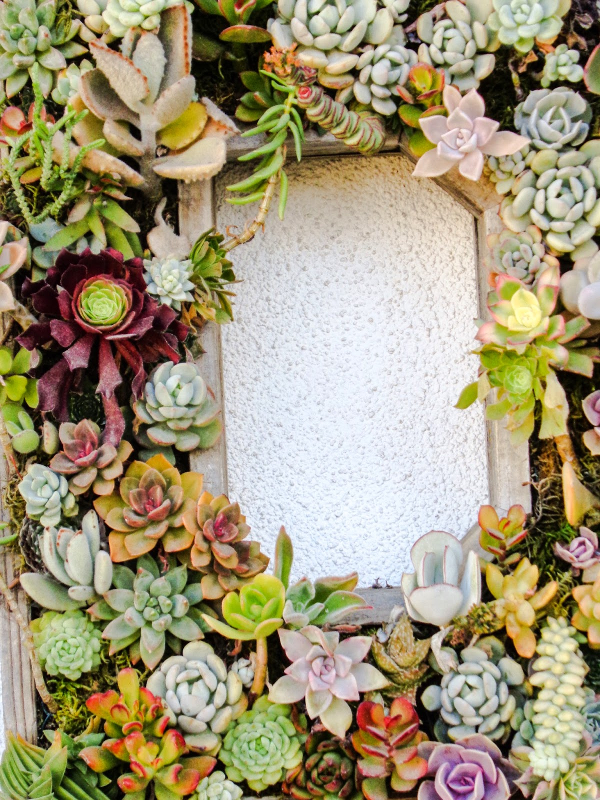 Succulent boxes at Model Bakery in Napa, Parrish The Thought