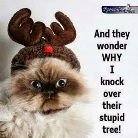 funny angry cat picture