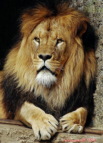 imagenes animales mamiferos - FOTOS: las increíbles imágenes de mamíferos captados in