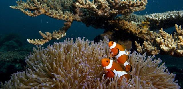 جولة سياحيه مصور لجزر ماليزيا mal-u1.jpg