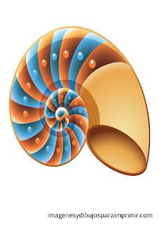 caracola de colores  Conchas de mar para imprimir
