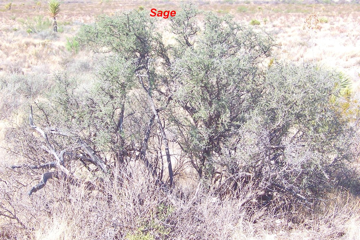 Horse Hunts A Desert Manhunt Smoke Tree Mystery Series