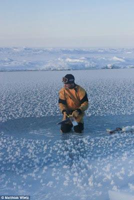 Bunga es mirip lotus tumbuh di lautan arktika