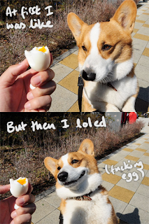 cute corgi and egg funny