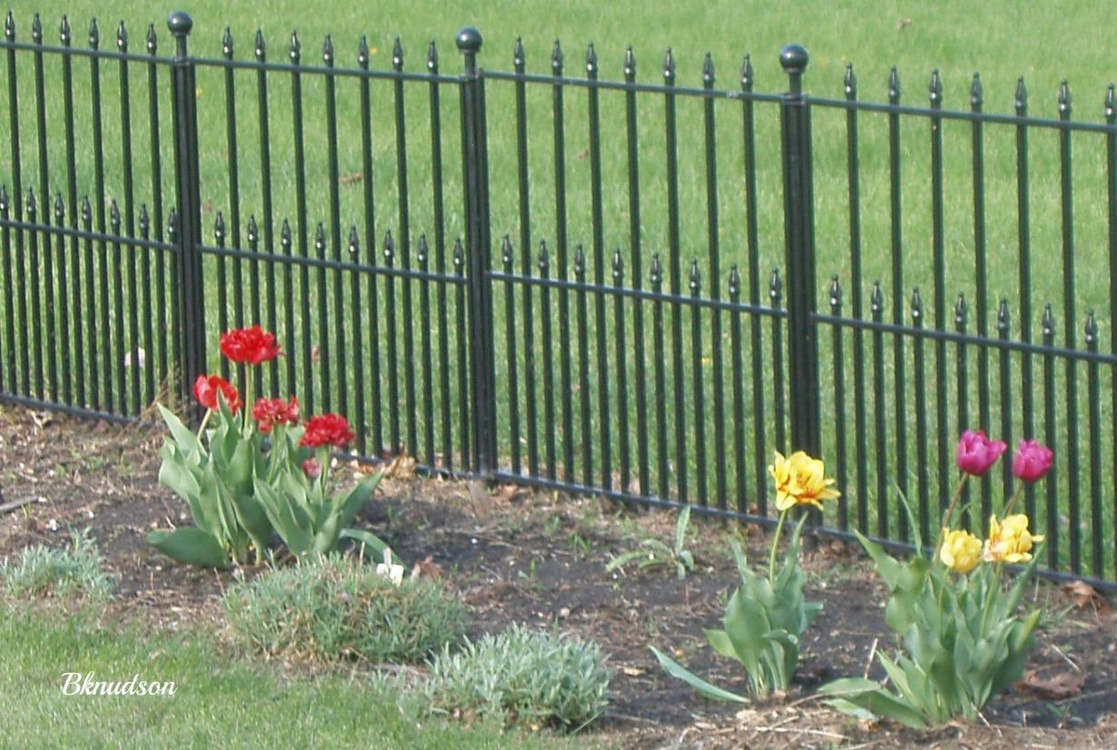 Fancy Backyard Fences : Grandma Barbs This and That Fancy Backyard Fence
