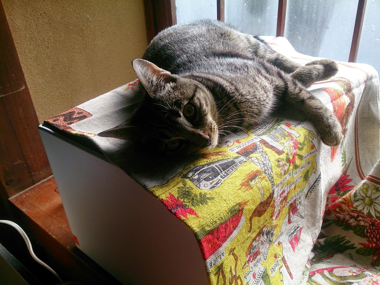 レーザープリンターと猫