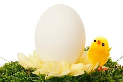 卵とひよこ