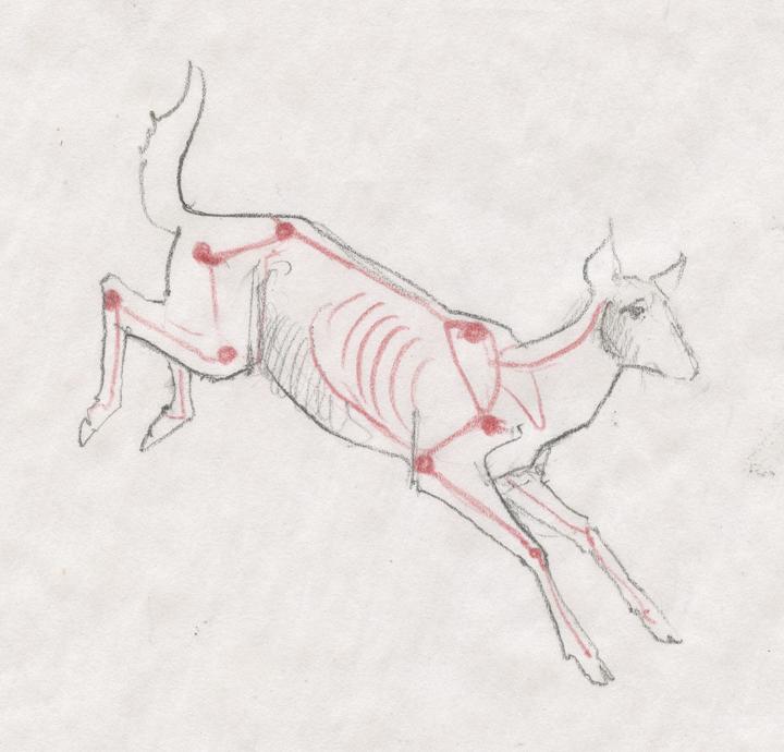 Sandy Scott Art: #653 Locomotive anatomy . . . deer