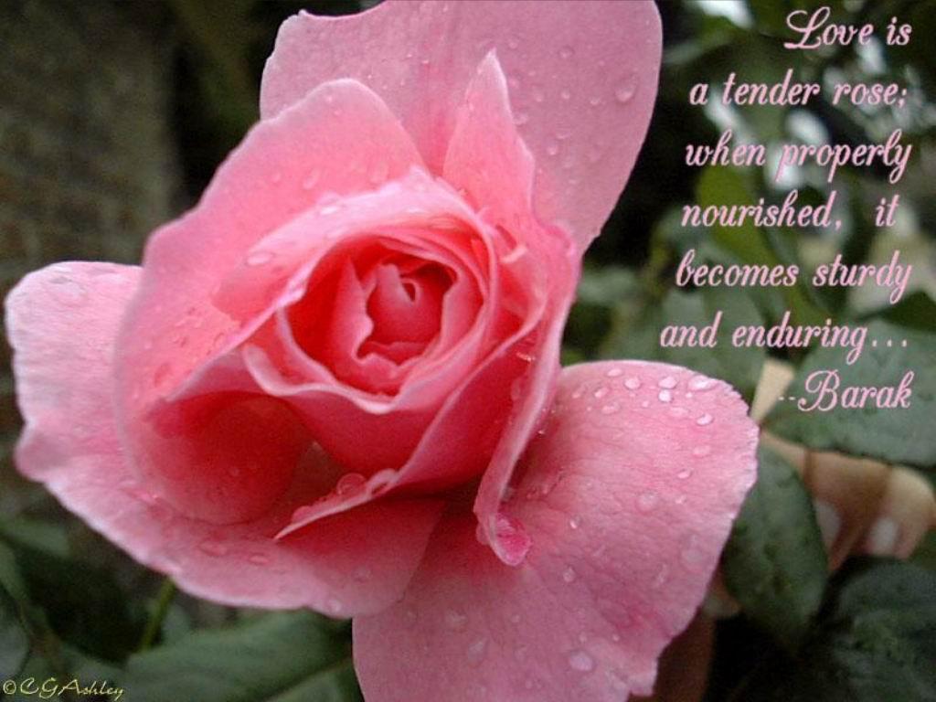 Sanjay Love Flowers Quotes Love Flowers Greetings Love Flowers