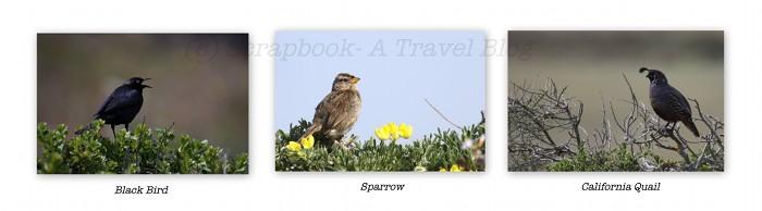 Point Reyes National Seashore birds