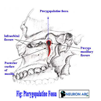 pterygopalatine fossa anatomy : contents and communications