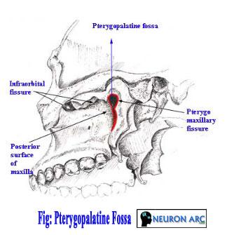 pterygopalatine fossa anatomy : contents and communications