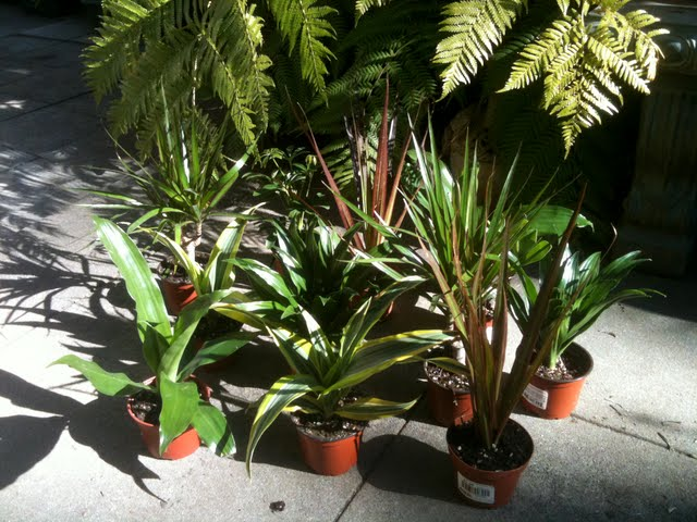 Tropical house plants casual cottage