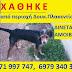 Χάθηκε σκυλάκι από την Δουκίσσης Πλακεντίας...